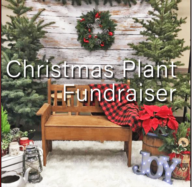 Christmas Plant Order 2020